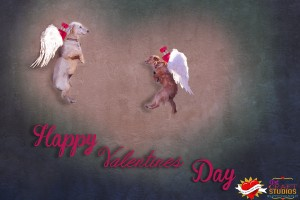 Consider Adopting a pet for Valentines day!